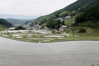明日香村の棚田 - 浜千鳥写真館