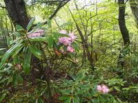 高峰山雨の花散歩2019.6.16(日) - 心のまま、足の向くまま・・・
