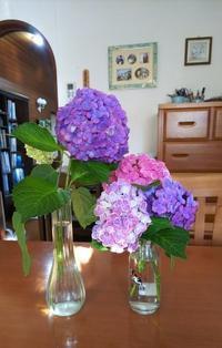 紫陽花 - しみずよしこの英語教室日記