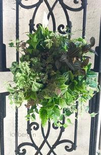観葉植物の - 小さな庭 2