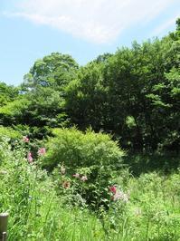 散歩2019.6.17梅雨の晴間の四季の森公園 - Gonta2019's Blog
