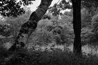 森の構成 - フォトな日々