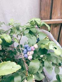 初収穫 - blancheの日記