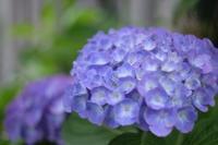 My Garden June - aya's photo