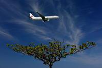 器の上 - 南の島の飛行機日記