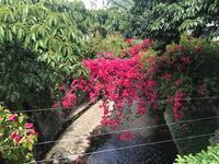 糸川に咲いている花と・・ - 『熱海で暮らす』 リゾート不動産情報