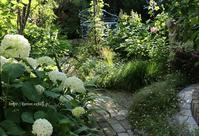 庭への思いブログへの思い - miyorinの秘密のお庭