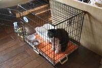 強面ビビリ王子の家猫修業記その26準備は万全? - りきの毎日