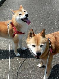 一緒にお散歩 - abby & zack