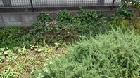 今日も草取り - うちの庭の備忘録 green's garden