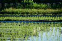 田植えの季節 - Naturalwarmth. FEEL