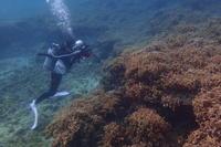 19.6.18スズメ(チビ)を追って! - 沖縄本島 島んちゅガイドの『ダイビング日誌』