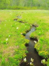 ミズバショウの湿原Ⅱ - 風の香に誘われて 風景のふぉと缶
