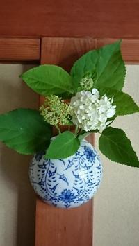 6月のお庭のお花を生けてみました❶ - 難病あっても、楽しく元気に暮らします(心満たされる生活)