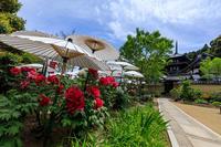 當麻寺・西南院の花盛り - 花景色-K.W.C. PhotoBlog