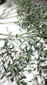 olive objet 思案中... - ART/CREATION