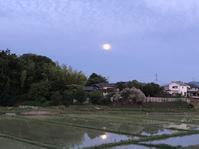 朝の風景 - 暮らしのおともに
