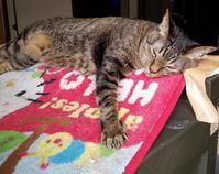ブラウン管テレビを捨てれない理由 - キジトラ猫のトラちゃんダイアリー