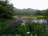 三渓園の花菖蒲 - 暮らしを紡ぐ