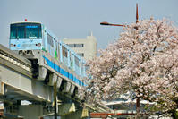 北九州モノレール2019春(桜編) - ポン太の写真帳別館