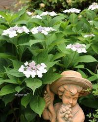 お色直し~♪紫陽花&サフィニア - miyorinの秘密のお庭