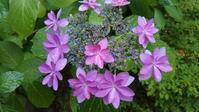 路地裏の花 - blueletter