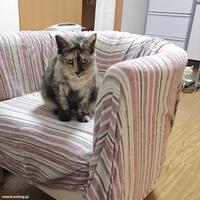 端っこポンコ - 賃貸ネコ暮らし|賃貸住宅でネコを室内飼いする工夫
