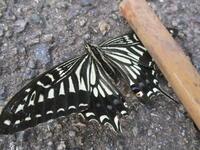 蝶 - 季節の写真