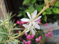 ラン - 季節の写真