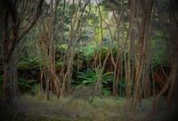 冬でも森林浴/Forest Bathing in Aotea Trail - アメリカからニュージーランドへ