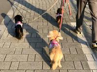19年6月19日 おちり祭り(笑)&懐かしいpic! - 旅行犬 さくら 桃子 あんず 日記