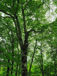宇宙の森 - 風の香に誘われて 風景のふぉと缶