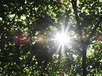 自然の恩恵 - 千葉県いすみ環境と文化のさとセンター