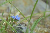 4月の山活②**飯野山は地元に愛される山 - きまぐれ*風音・・kanon・・
