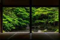 新緑の蓮華寺 - 花景色-K.W.C. PhotoBlog