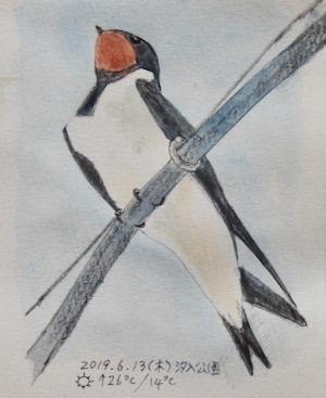 #野鳥スケッチ #ネイチャー・ジャーナル 『燕』 Hirundo rustica -