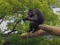 朝一番のレックスとミツコ。 - a diary of primates