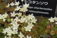 小さな宇宙人みたいな花 - White Love