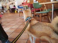 DOG DEPT CAFE お台場東京ビーチ店 - 鉄丸が行く(withひめ)