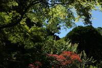 6.16 浄智寺 - 週末はソニーα6500でぶらり鎌倉・湘南散歩!