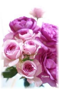 たまには・・・薔薇を - おだやかに たのしく Que Sera Sera