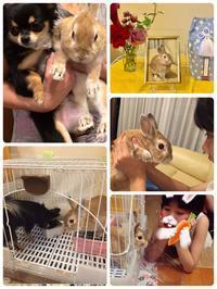 ウサギの、チップ - みすずの気まぐれブログ