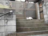 川越でのネコ - 続マシュービ日記
