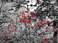 森の中のムラサキシオツツジ - 風の香に誘われて 風景のふぉと缶