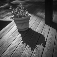 影にピントを取られ愕然とするチューリップ - Film&Gasoline