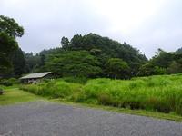 大自然の中であそぼう/鮮やかな紫色 - 千葉県いすみ環境と文化のさとセンター