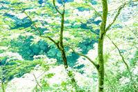 晴耕雨読 小安峡 - 晴耕雨読 | 秋田県小安峡温泉 湯の宿 元湯くらぶの公式ブログ