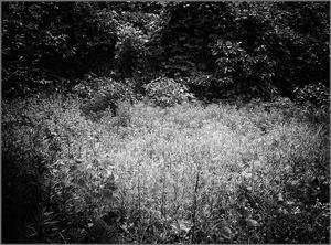 自然のままに - 蝴蝶の夢