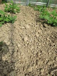落花生の土が・・固すぎる・・。 - あいやばばライフ
