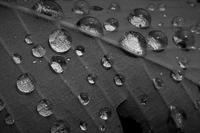 青梅雨 - フォトな日々